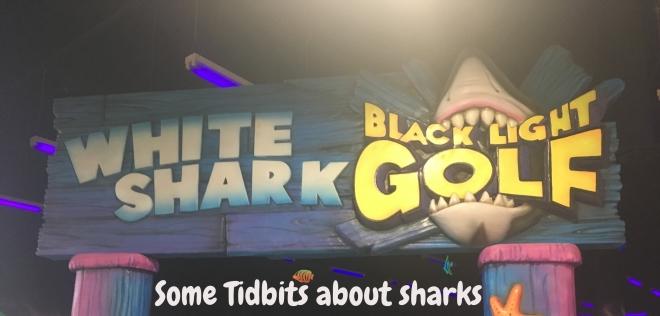 Shark Week Photo